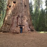 sequoia just minutes away from the River Jewel