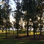 Gentle breeze thru trees outside of yoga room