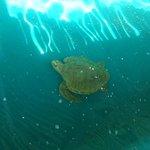 Aquário de tartarugas