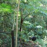 The elusive cassowary