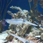 skittlefish