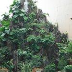 bonsai gigante