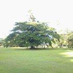meraviglioso raintree al centro del resort