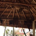 Shark in palapa!