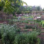 Organic farm you could see from dining area.. When Hwee Ling has the time.. She will share with