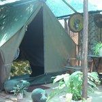 Safari Twin tents