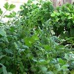 Our Herbs Garden
