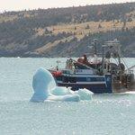 """""""Iceberg ahoy"""""""