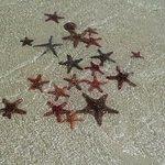 stelle di zanzibar