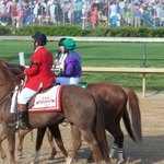 California Chrome Derby 2014 Winner