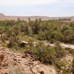 oasis SafSaf