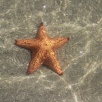 Estrela do mar na agua cristalina