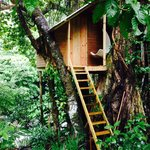 Toms tree house. I want to stay in here next time !
