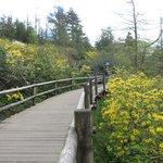 The lovely azalea walk