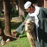 Friendly camel Cleopatra