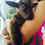 Laurelee and Alex, a few weeks old rescue, at Leilani Farm Sanctuary.