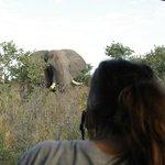 Huyendo de los elefantes