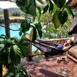 Bamboo Tree House hammock