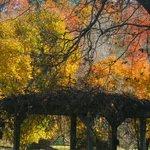 Fall at Valley Springs