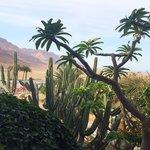 Территория Спа-центра на берегу Мертвого моря