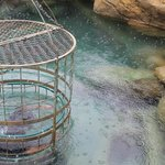 crocodile cage diving......not for us!!