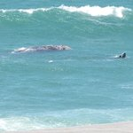 From our room, a mother whale and her calf