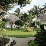 vegetation et bungalow