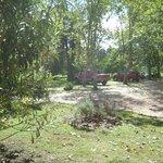 Esta foto marca el camino hacia el tambo, es un típico paisaje del lugar, muchos árboles...