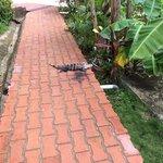 Iguana en un pasillo del hotel