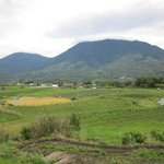 Mountain view & rice field
