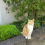 Kitty posing for tour