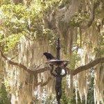 Bird enjoying fountain