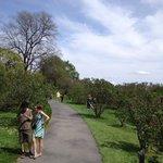 Highland Park - trails through lilacs