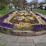 Highland Park - Pansies