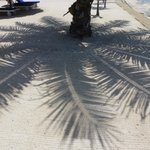 Palm shade art