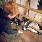 My son feeding the goats :-)