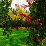 Jalbrook Cottage autumn garden