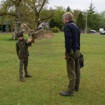 Greame flying Corrie the European Eagle Owl