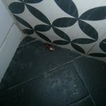 kakkerlakken in damestoilet !