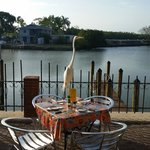 An egret landed in a table just in front of our table and was nicely taken away by a waitress