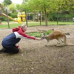 Gorgeous Matilda Red Kangaroo who I have sponsored