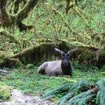 Elk near the trail