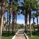 Aisle of palms!