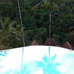 Jungle Reflection