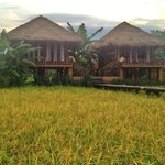 Villa among the golden rice field..what a perfect rest