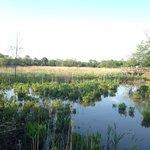 Small ponds