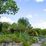 more of the lovely garden