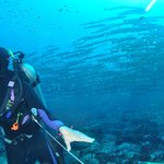 Big Fish Country: Barracudas über Barracudas !