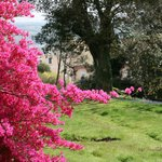 The woodland walks around the castle with springtime blooms