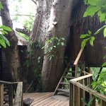 The shared balcony entrance to the two tree houses.